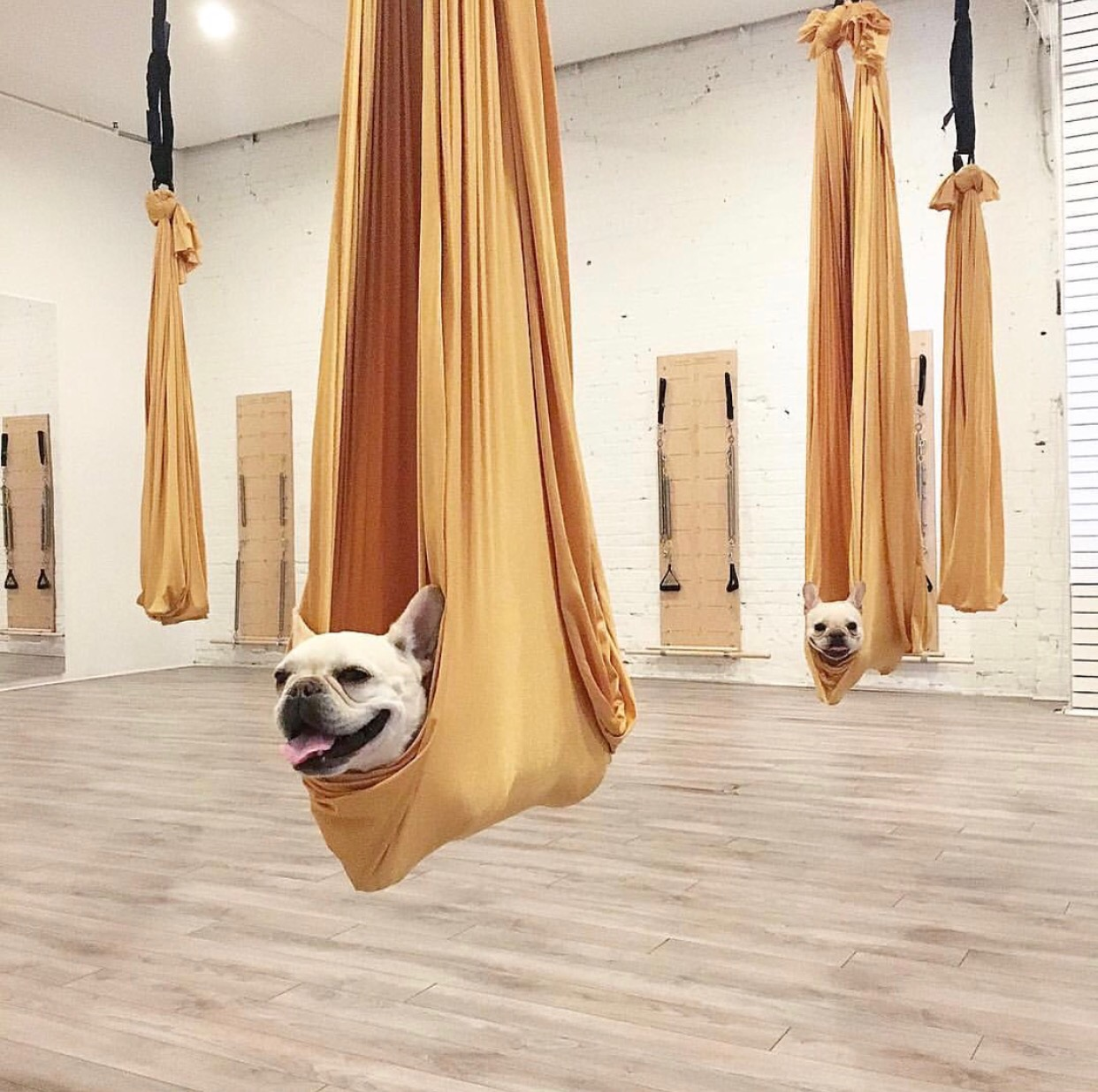 Aerial Yoga Was Not For Me